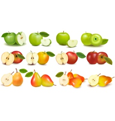 set of red and green fruits vector image