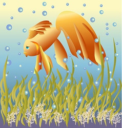 Golden fish vector