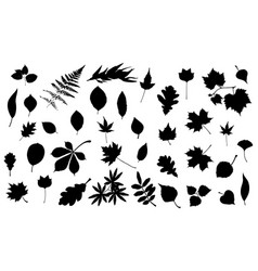 silhouettes of tree leaves vector image