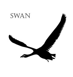 black swan logo silhouette vector image