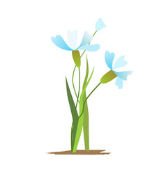 blue and white spring flowers bouquet vector image