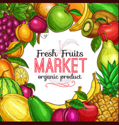 fresh fruit and berry sketch frame for food design vector image
