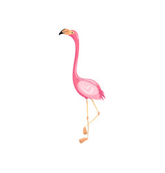Pink flamingo exotic tropical bird vector
