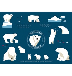 Polar bears set vector image