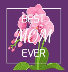 mothers day pink orchid frame violet background vector image