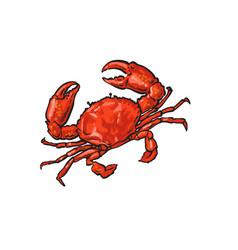 sketch cartoon sea crayfish crab isolated vector image
