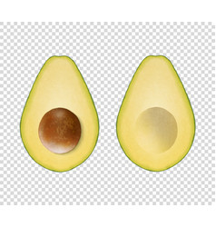 3d realistic cut half avocado with seed vector image