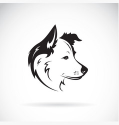 Border collie dog on white background pet vector