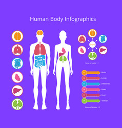 Human body infographic on vector