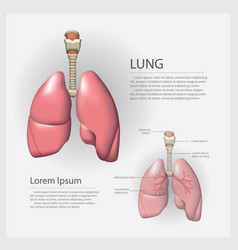 Lung with detail vector