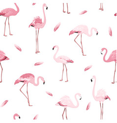 Pink flamingo birds flamboyance feather pattern vector
