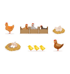 poultry breeding hen hatching eggs in nest vector image