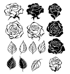 contour rose buds and leaves vector image