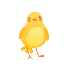 Cute baby chicken funny cartoon bird character vector