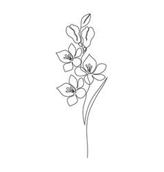 Freesia flower on white vector
