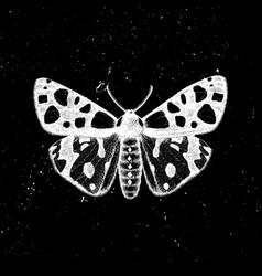 hand drawn leopard tiger moth mystic entomo vector image