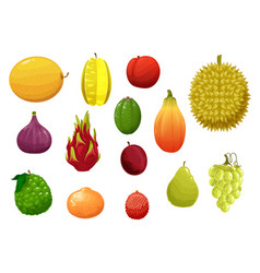 Ripe and fresh exotic fruits cartoon set vector