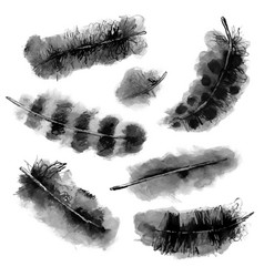 transparent watercolor birds feathers set vector image