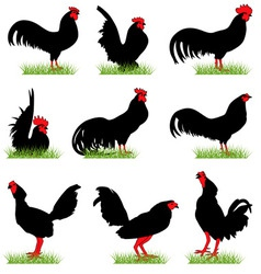 roosters set02 vector image vector image