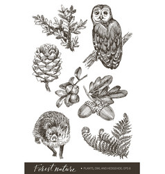 Collection highly detailed hand drawn acorns vector