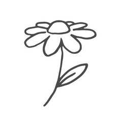 doodle flower hand drawn line sketch flower vector image