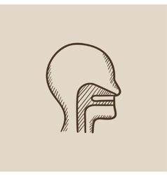 Human head with ear nose throat system sketch vector