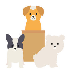 Little dogs adorables mascots with carton box vector
