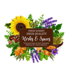 natural herbs and spices poster vector image
