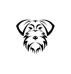 schnauzer dog head isolated on white background vector image