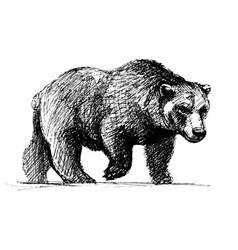walking bear vector image