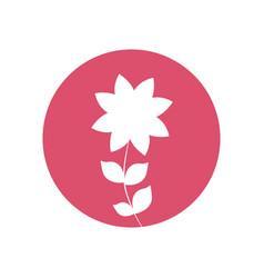 frangipani flower natural icon vector image vector image