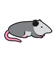 opossum vector image