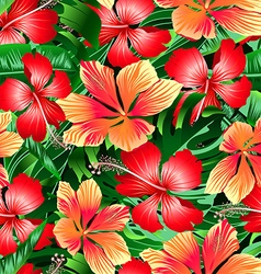 Tropical orange and red variegated hibiscus vector image