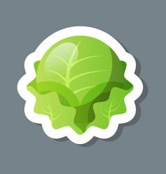 Fresh green cabbage iceberg lettuce sticker tasty vector