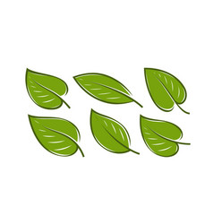 green leaf set nature logo or icon vector image