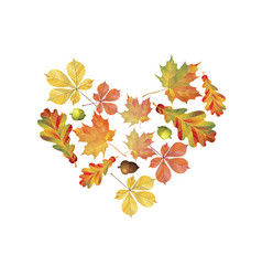 heart of colorful autumn leaves isolated on white vector image