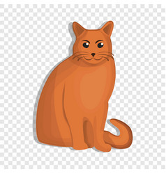 orange cat icon cartoon style vector image