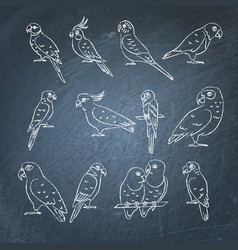 Set of parrot icon sketches on chalkboard vector