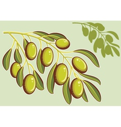 Set of backgrounds with green olives vector image vector image