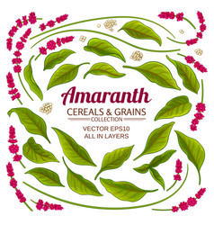 Amaranth elements set on white background vector
