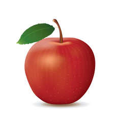 Realistic red apple on white background vector