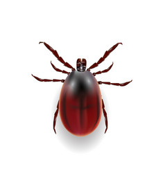 Harvest bug on a white background wiht shadow vector