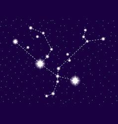 Andromeda constellation starry night sky vector