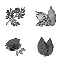 dill cocoa beans basilherbs and spices set vector image
