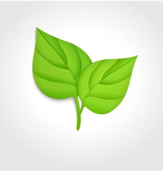 Green leaves concept vector