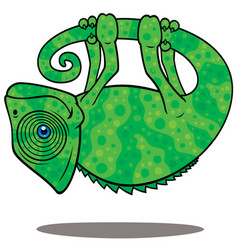 Magical chameleon vector