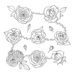 set rose flowers with buds leaves and thorny vector image