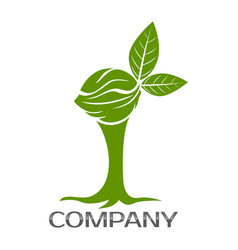 walnut tree logo vector image