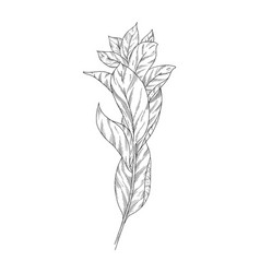 leaves ink sketch on white background vector image
