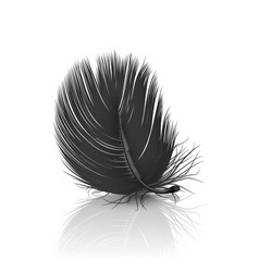 3d realistic falling black fluffy twirled vector image